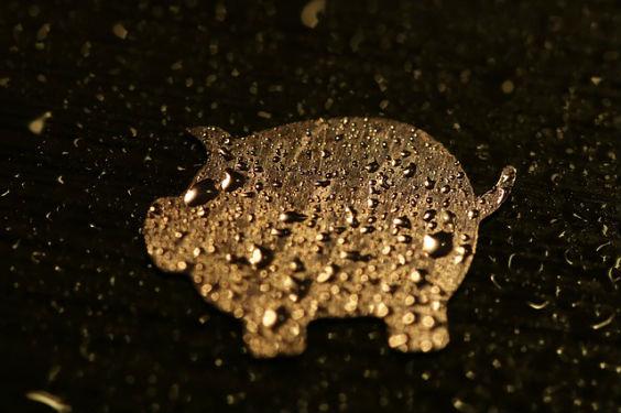 schwein gold nt 564