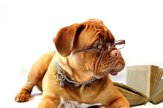 hund brille 564