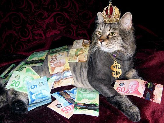 katze reich krone d 564