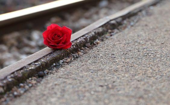 rote rose neben schiene 564