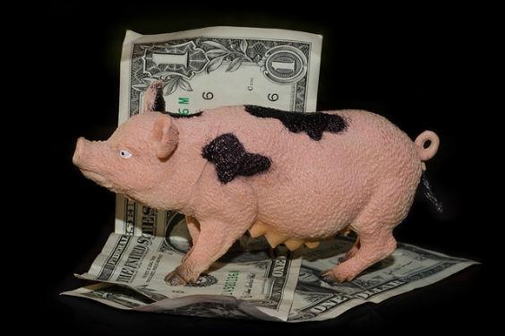 schwein schein geld 6t 564
