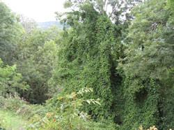 Waldinvestments können helfen, unsere Erde lebensfreundlicher zu gestalten